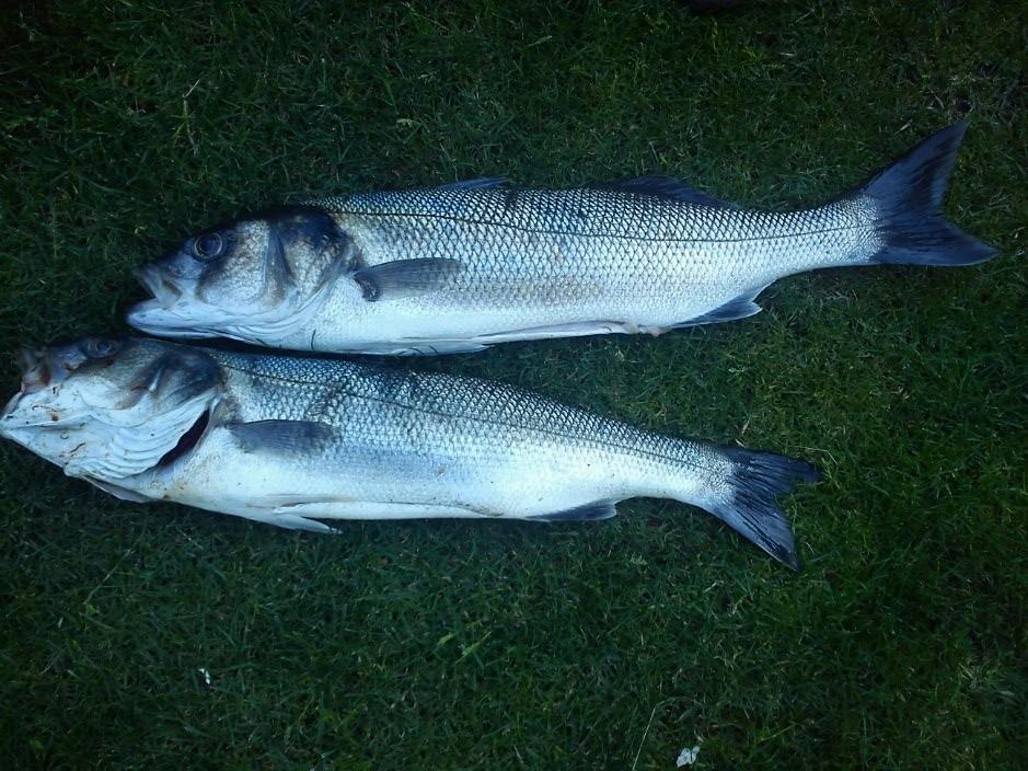 2 bass