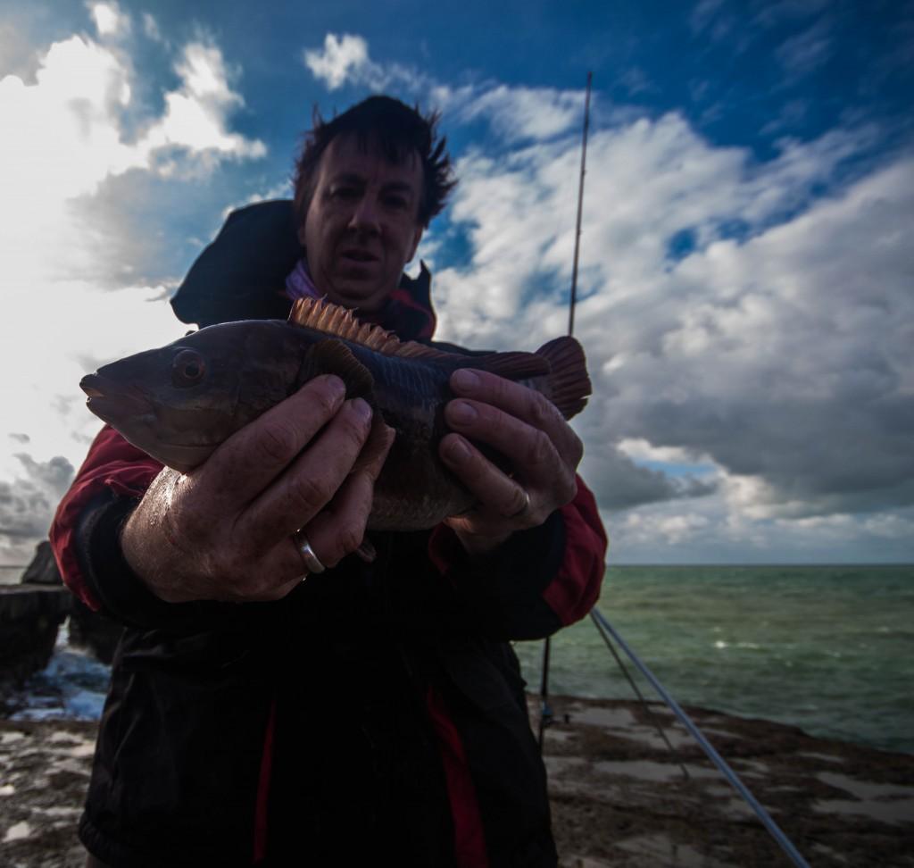 Wrasse fishing 2