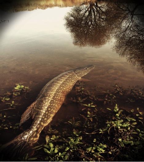 Pike croc