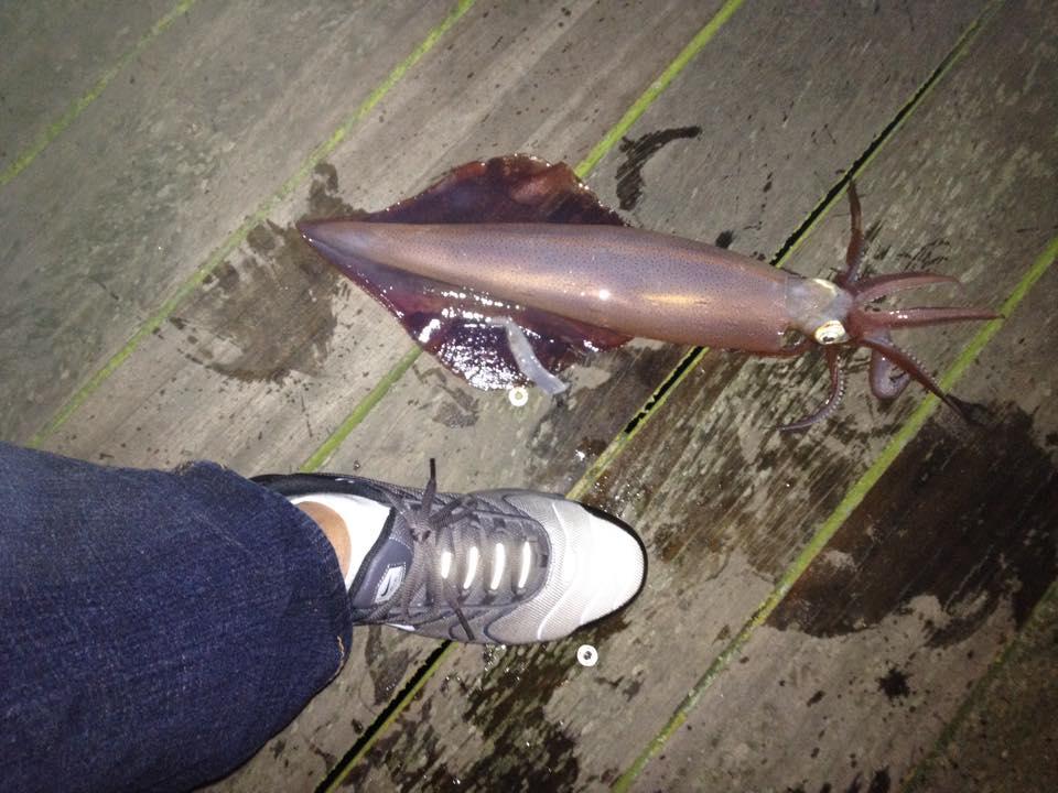 squid for marlon