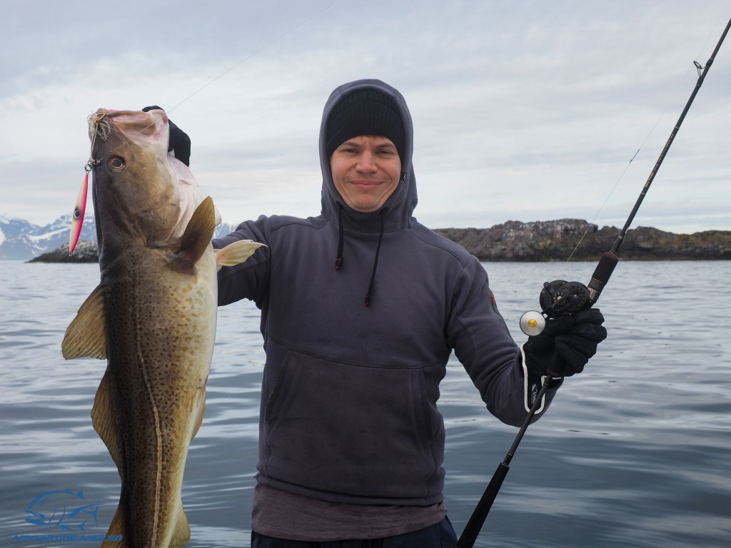 Norway Cod