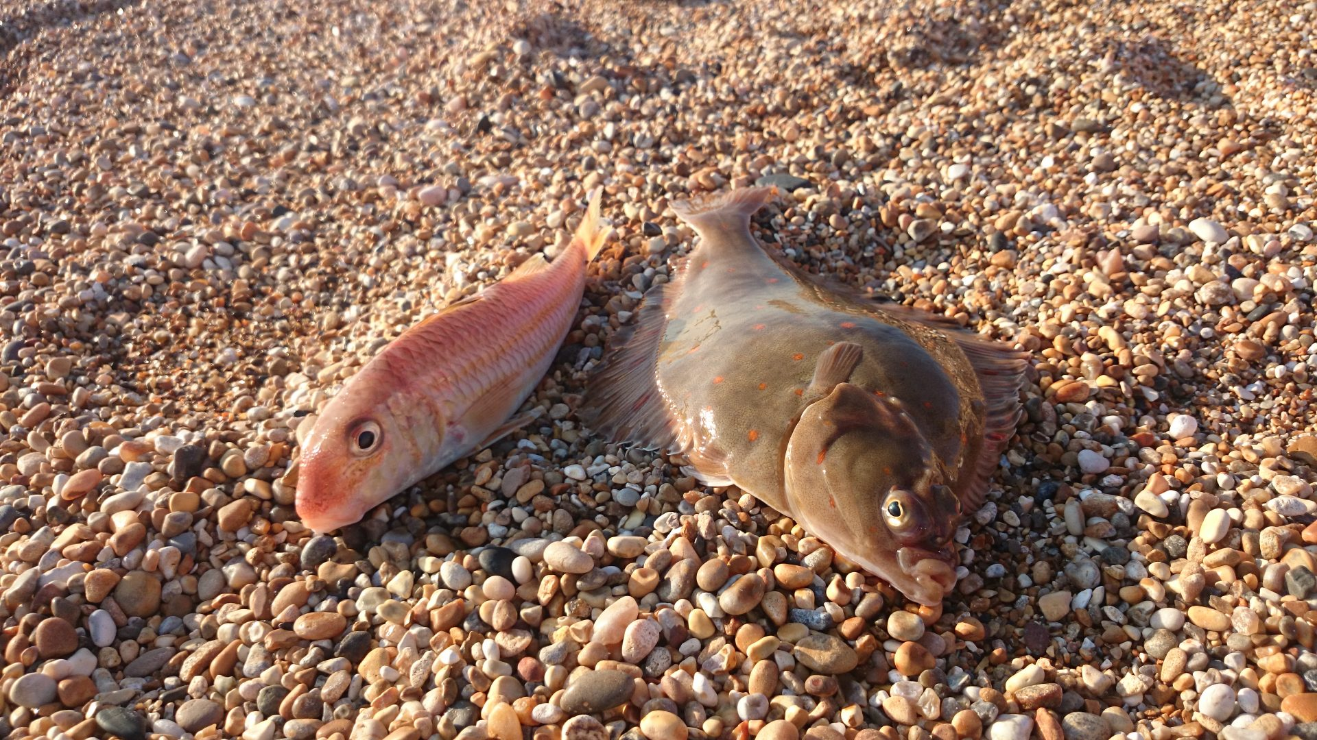 Red Mullet and Plaice