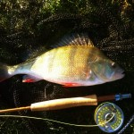 Fly fishing, Perch and Eternal Youth