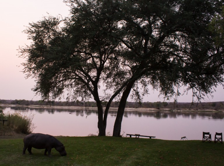 There's a Hippo on the lawn!