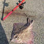 What to expect fishing the Essex coast.