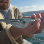 Garfish – The LRF Acrobat