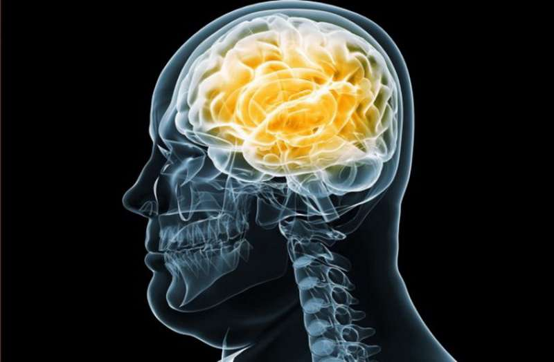 تأثير البدانة على الدماغ
