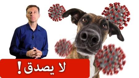 الكلاب تستطيع ان تكتشف فيروس كورونا