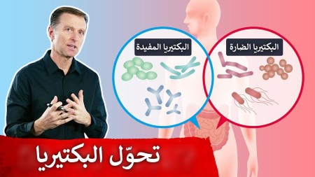البكتيريا النافعة
