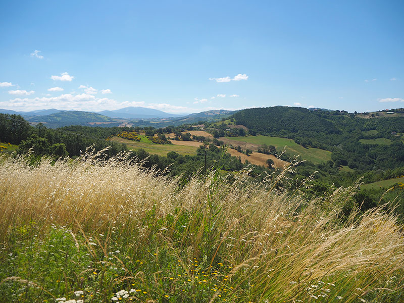 MONTEFALCO VIEW FROM TERRACE