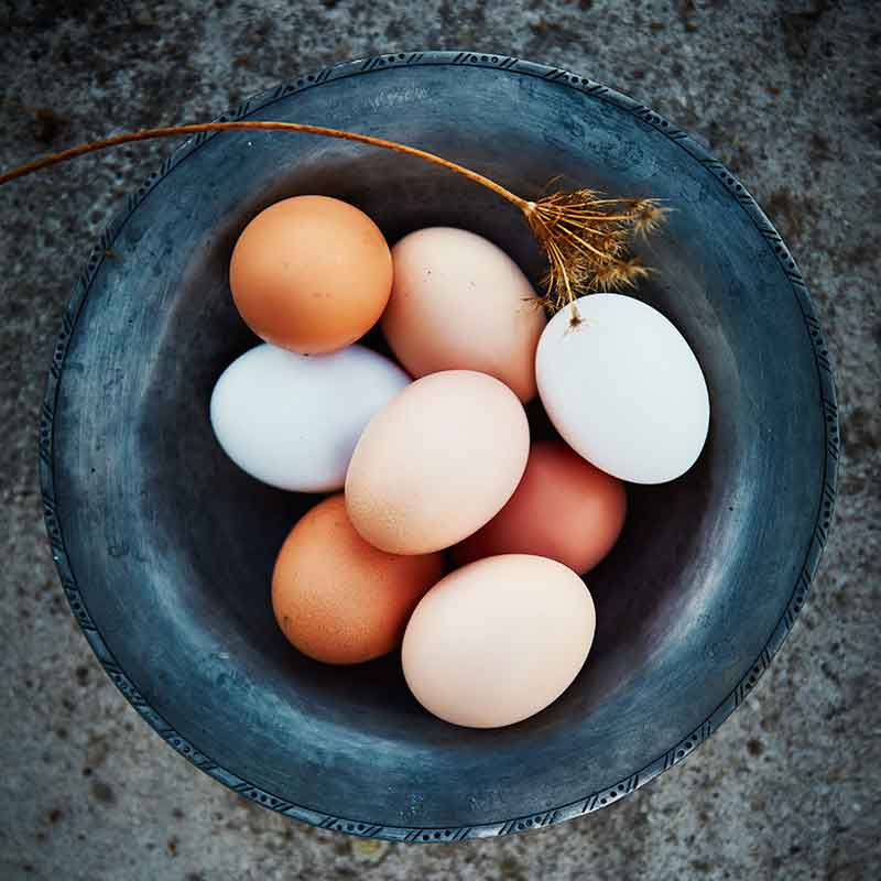 Our-Eggs