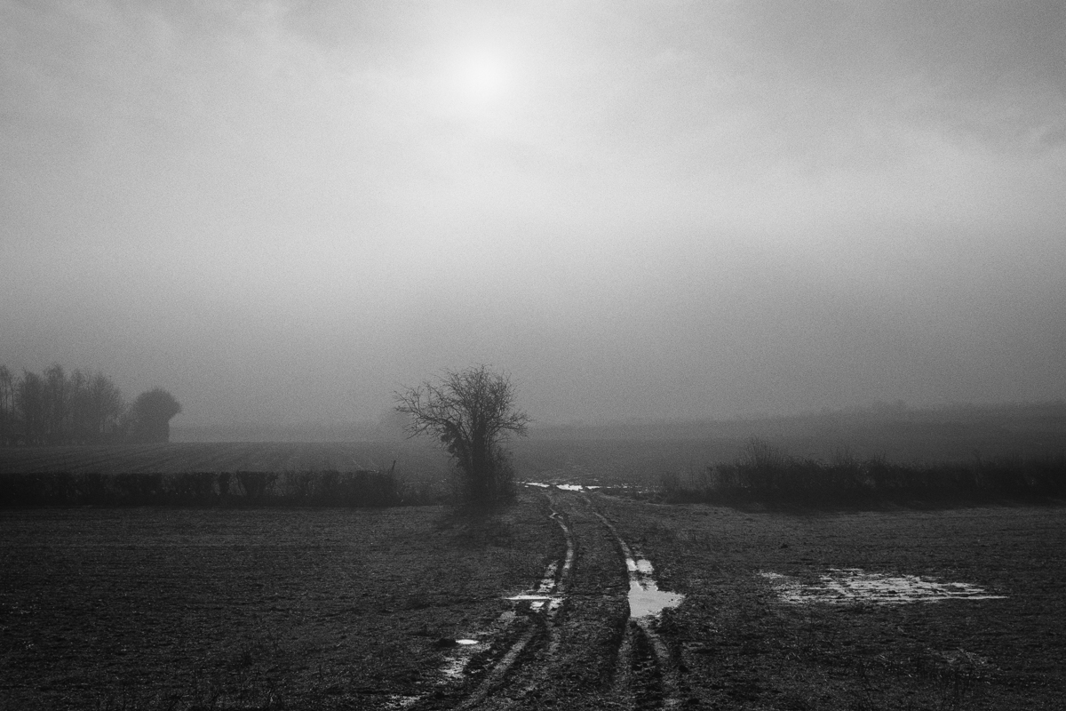 Black and white landscape showing waterlogged farm tracks and Winter trees in fog.