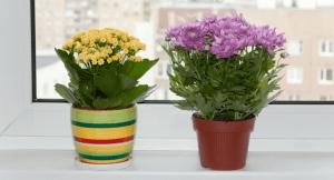 Flower Plant Shop Setup in Dubai