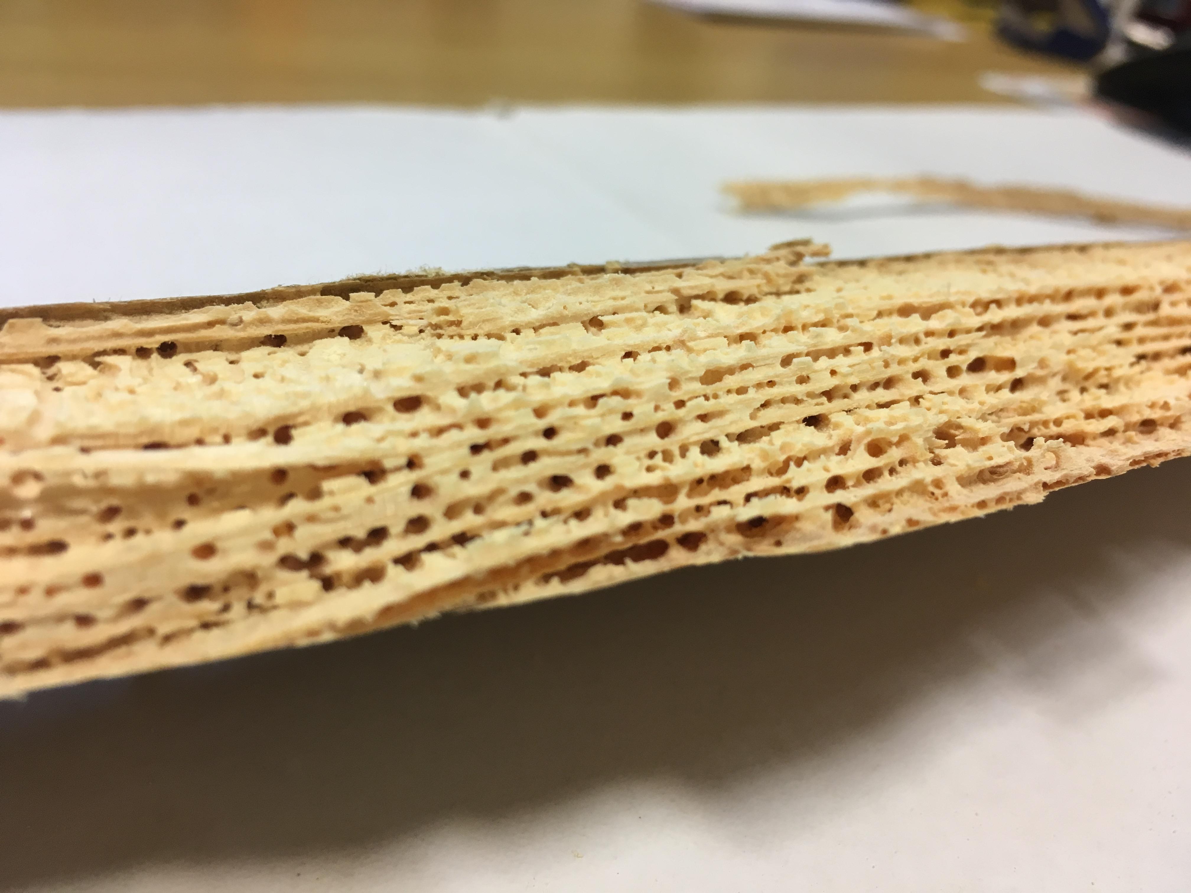 Woodworm Damage to Floorboard