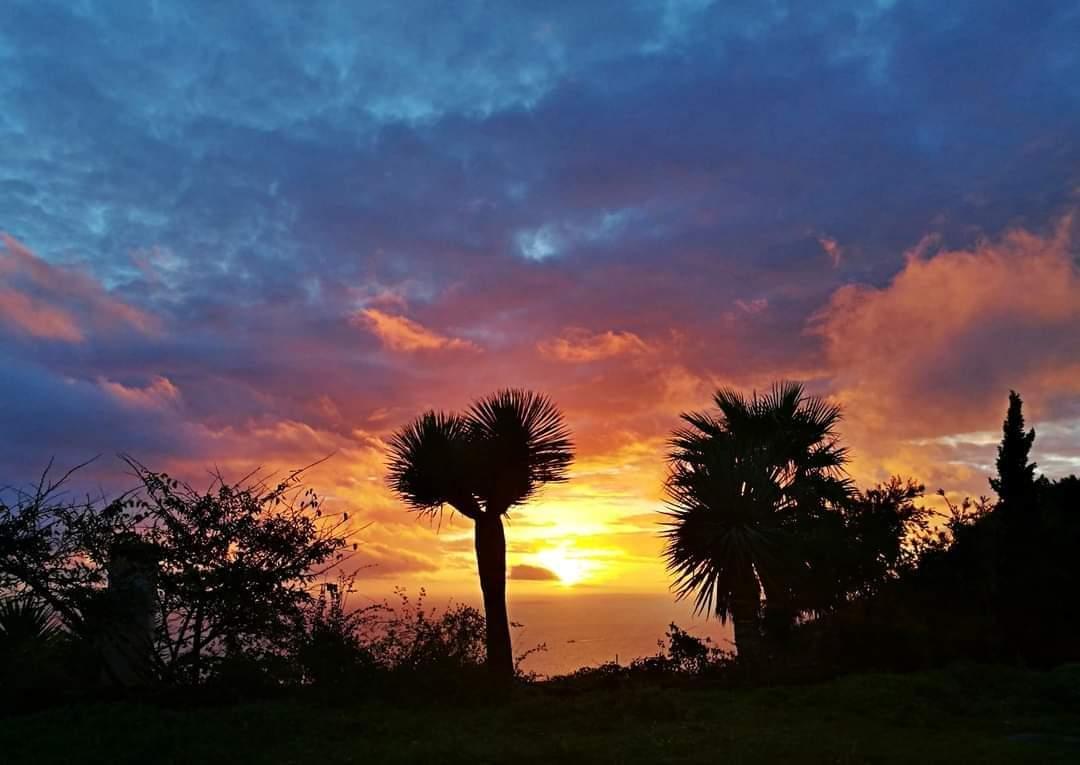 Madeira e os nossos Dragoeiros – As nossas lágrimas de dragão