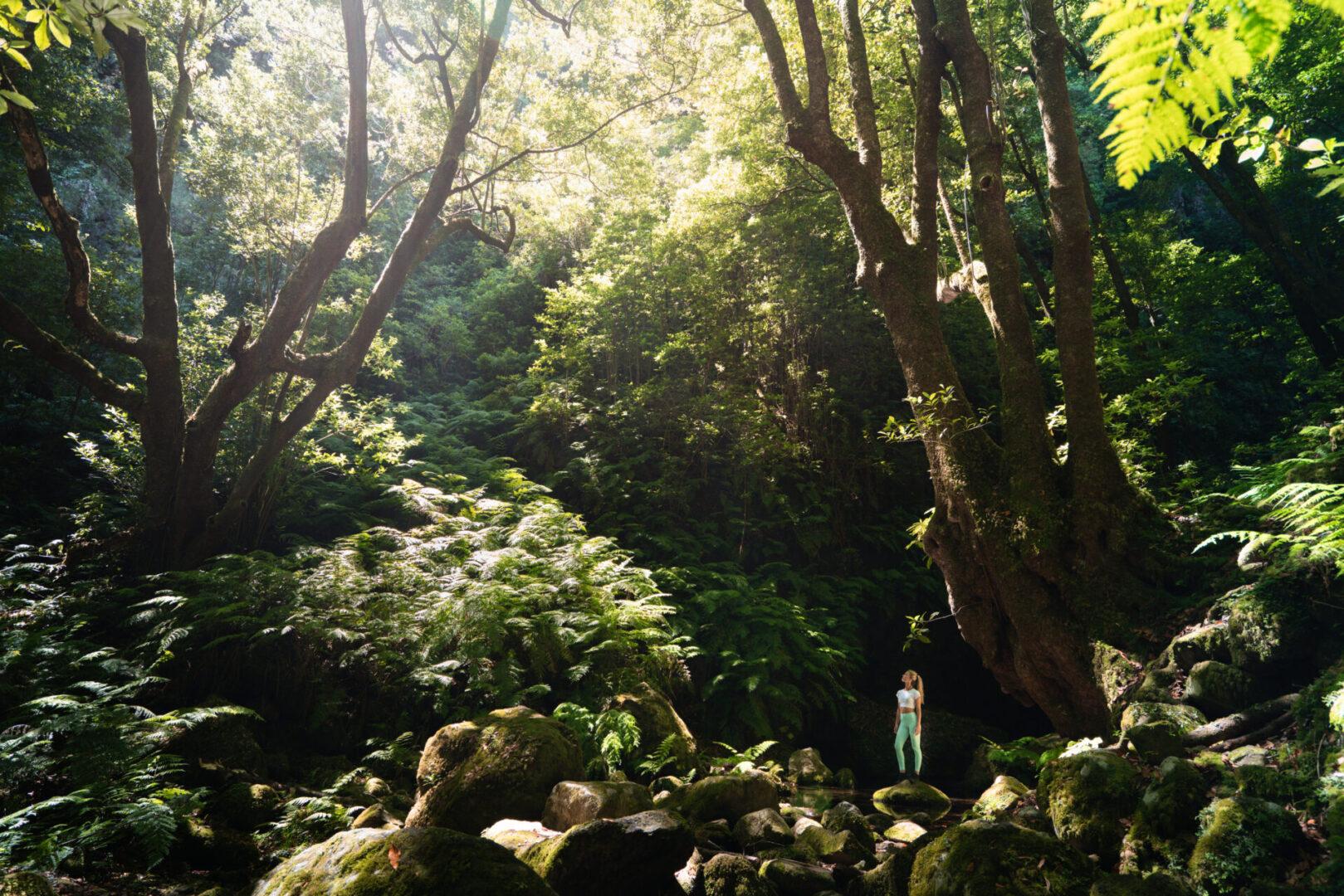 Guardiães da Floresta dos Louros – A nossa Laurissilva