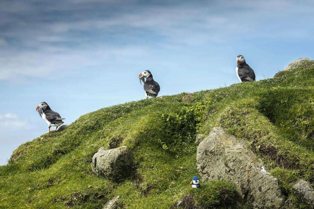Wildlife in the Faroe Islands