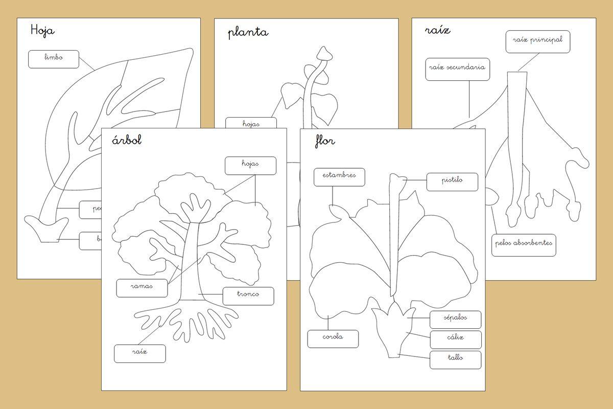 Imprimibles puzzles botánicared
