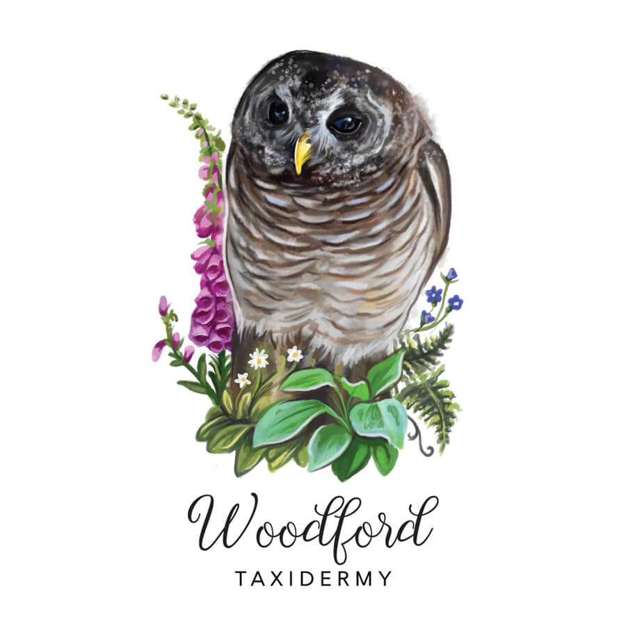 Woodford-Owl Illustration