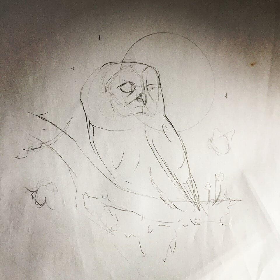Tawny Owl Sketch