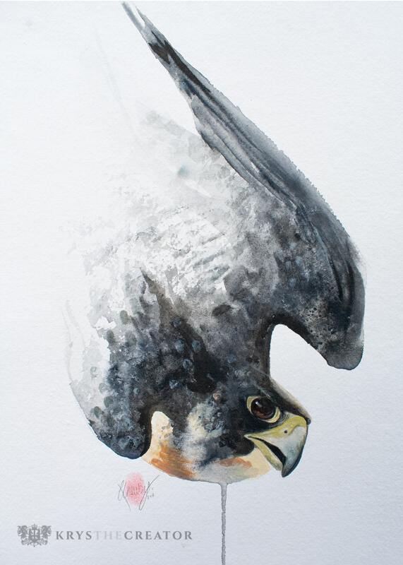 Peregrine Falcon Watercolour Art