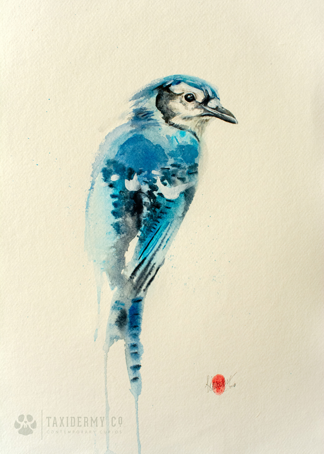 Blue Jay Watercolour Painting