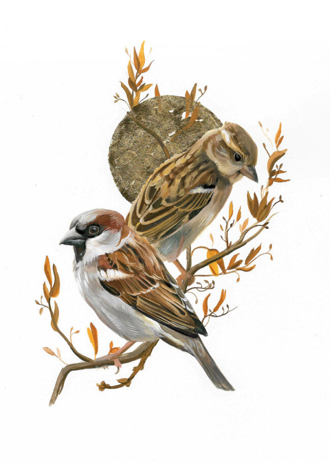 House Sparrow Painting Wildlife