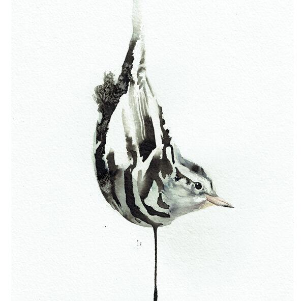 black and white warbler painting wildlife art