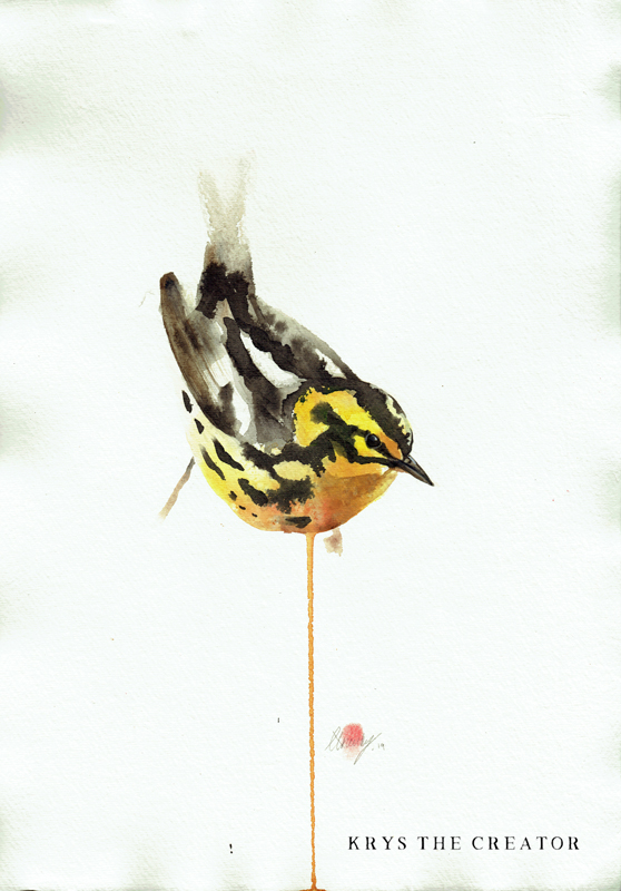 Blackburnian warbler American Wildlife art