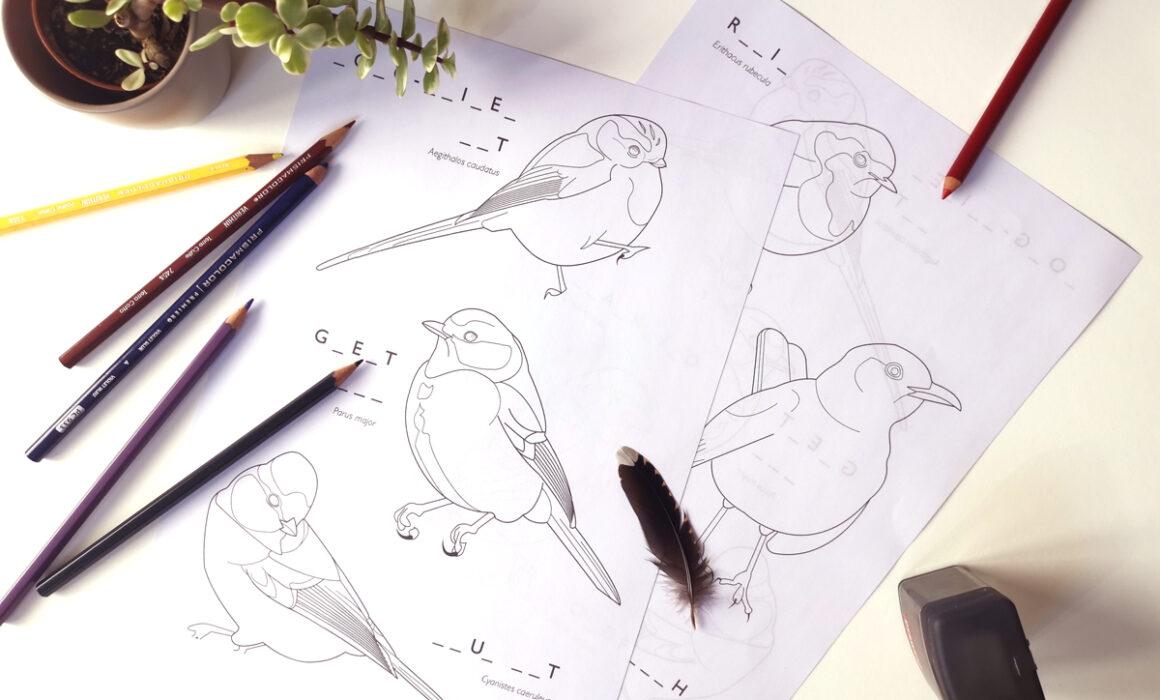 Bird Colouring In Sheet