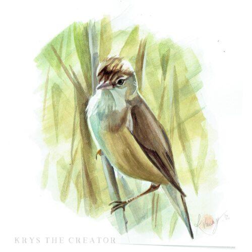 Reed Warbler Gouache Painting by Wildlife Artist Krysten Newby