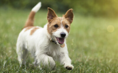 Likarda renews partnership with Roslin Technologies on canine stem cells