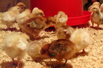 Eggcellent Proteins breakthrough gets BBC coverage