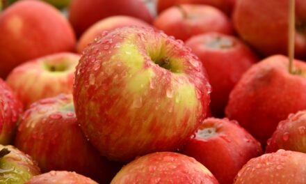 APPLES: THE FORGOTTEN SUPERFOOD
