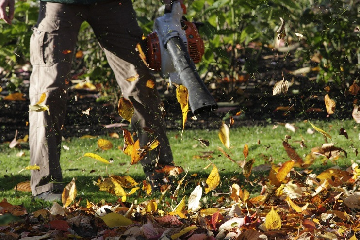 autumn leaf clearance in 2018