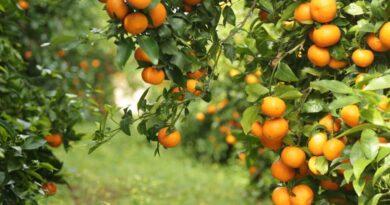 Konispol, 75 % e eksporteve te vendit sigurohen nga kjo zone