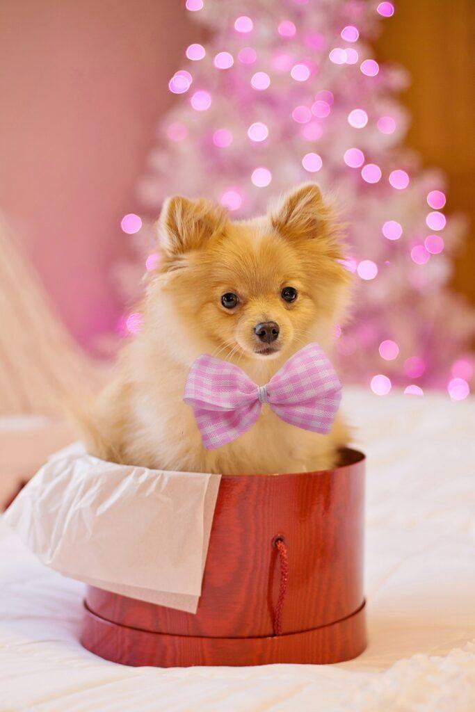 Adorable puppy Christmas wallpaper