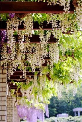 Artificial Wisteria Flowers Garland cascading Fake Flower for decorating patio pergola