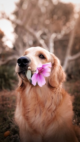 Cute puppy holding flower aesthetic image