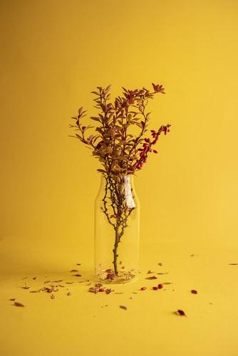 Dried flowers in vase summer wallpaper