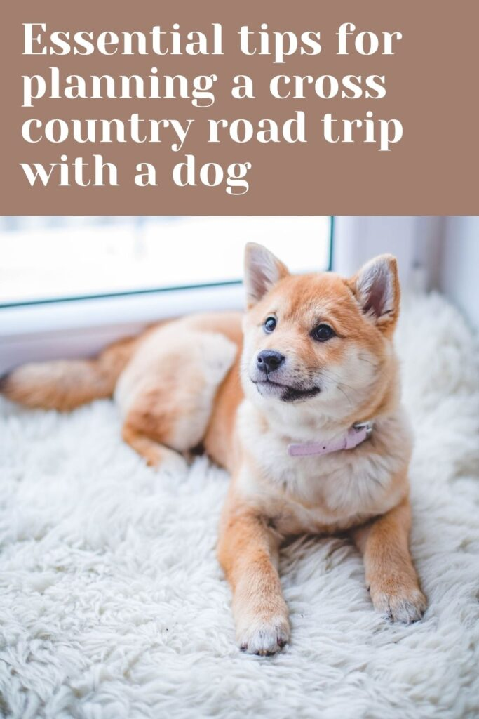 Essential tips for planning a cross country road trip with a dog. Tips for taking a road trip with your dog