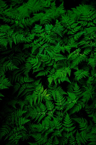 Infinite ferns wallpaper background