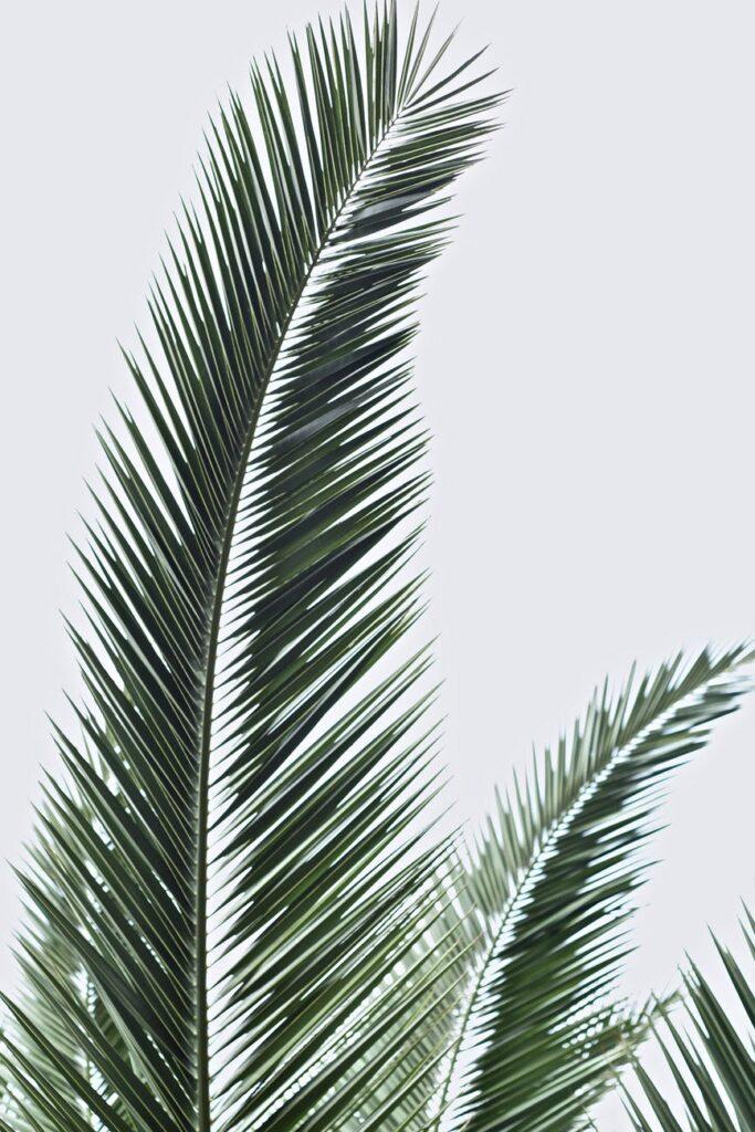 Palm fronds lock screen wallpaper