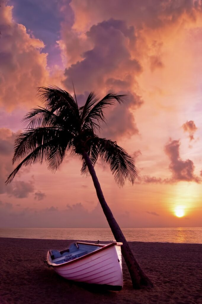 Palm tree and the ocean in the evening wallpaper