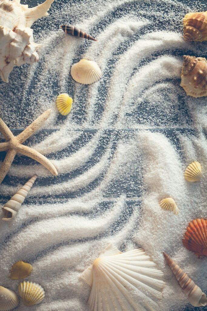 Seashells summer wallpaper background for mobile