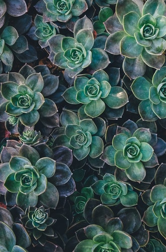 Succulent plants aesthetic image background