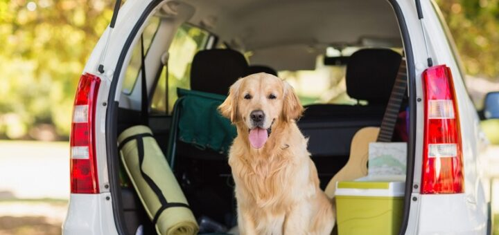 Tips for taking a road trip with your dog