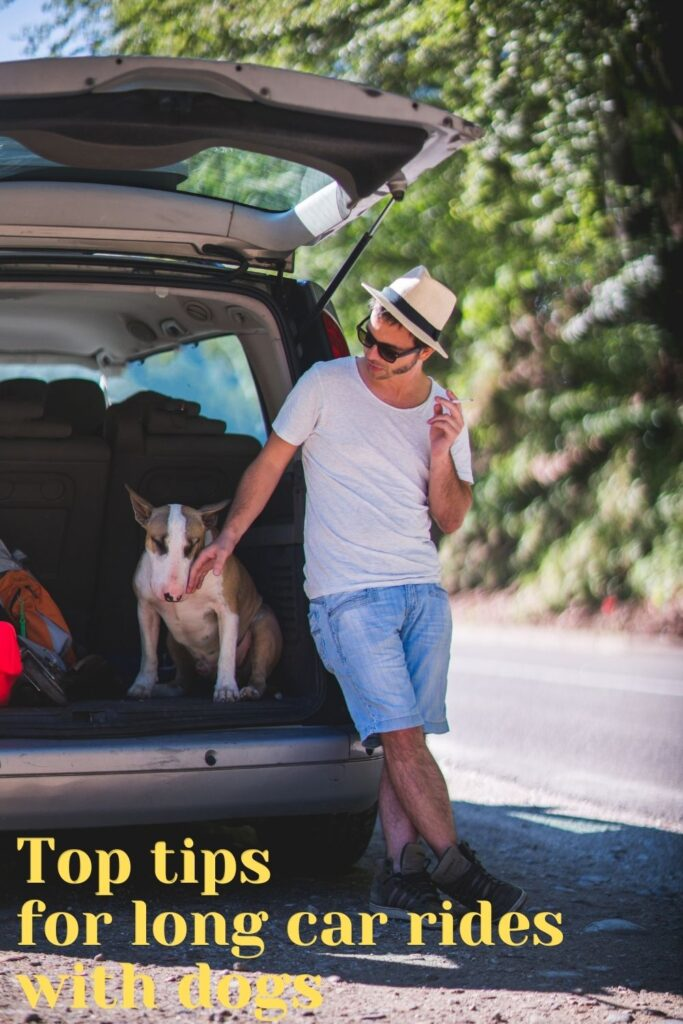 Top tips for long car rides with a dog
