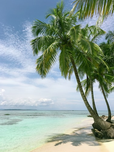 Tropical sunny beach aesthetic background
