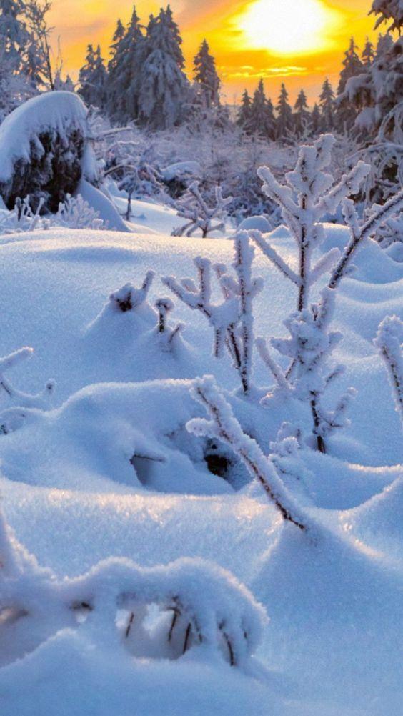 Winter landscape free wallpaper